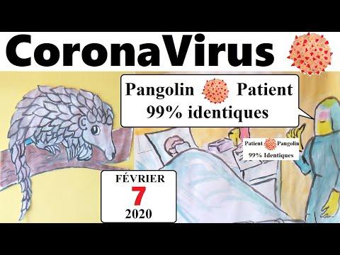 Le coronavirus et le pangolin: 99 % identiques aux patients atteints
