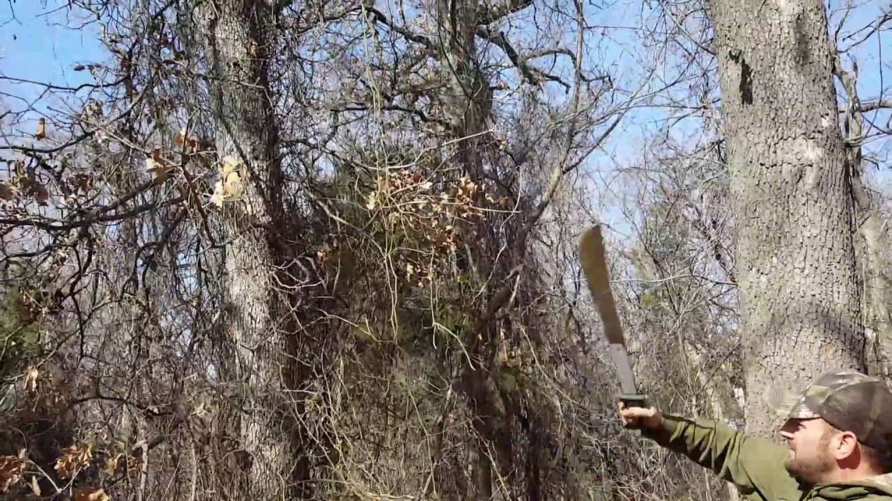 How To Remove Climbing Thorn Vines From Trees