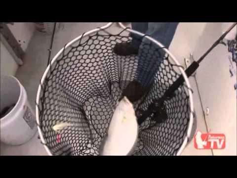 The Fisherman TV Ep 2: Rhode Island Fluke Fishing