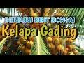 - Berburu Bibit Bonsai Kelapa Gading