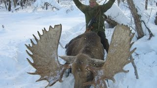 Зимняя, загонная охота на лосей в HD