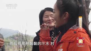 《田间示范秀》 20200114 种在崖壁上的铁皮石斛 CCTV农业