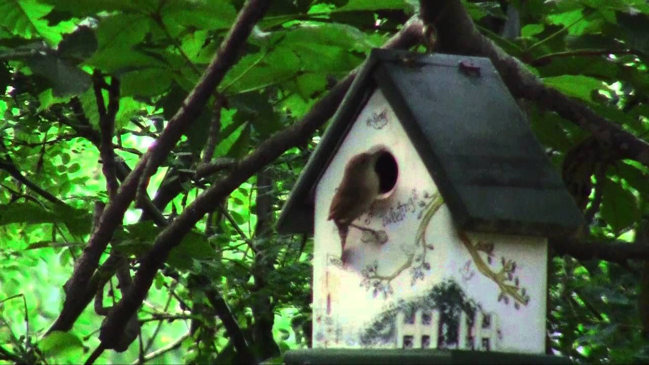 Live video of a baby bird leaving the nest - YouTube