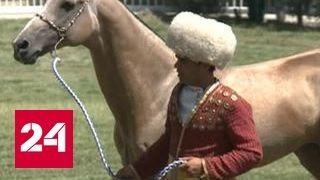 Легендарная порода: как готовят к состязаниям ахалтекинцев