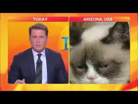 Best Cat News Bloopers