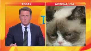Best Cat News Bloopers