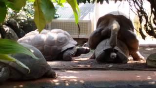Teenage Ninja Turtles XXX @zoo München