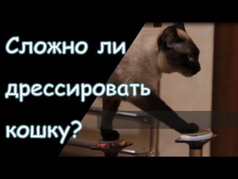 Как правильно дрессировать кошек. Наследники Куклачёва. Дрессированный кот.