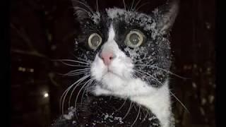 Очень смешные фото Кошки и котята  Cats and kittens   YouTube 360p