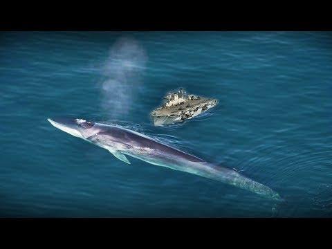 Penampakan sosok Ikan Raksasa di laut biru