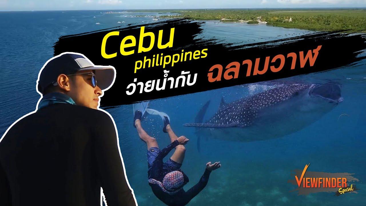 Cebu Philippines ว่ายน้ำกับฉลามวาฬ l Viewfinder Special
