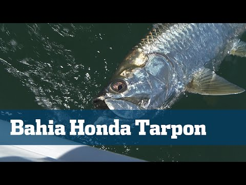 Florida Sport Fishing TV - Tarpon Bahia Honda Florida Keys Tackle - Season 06 Episode 04
