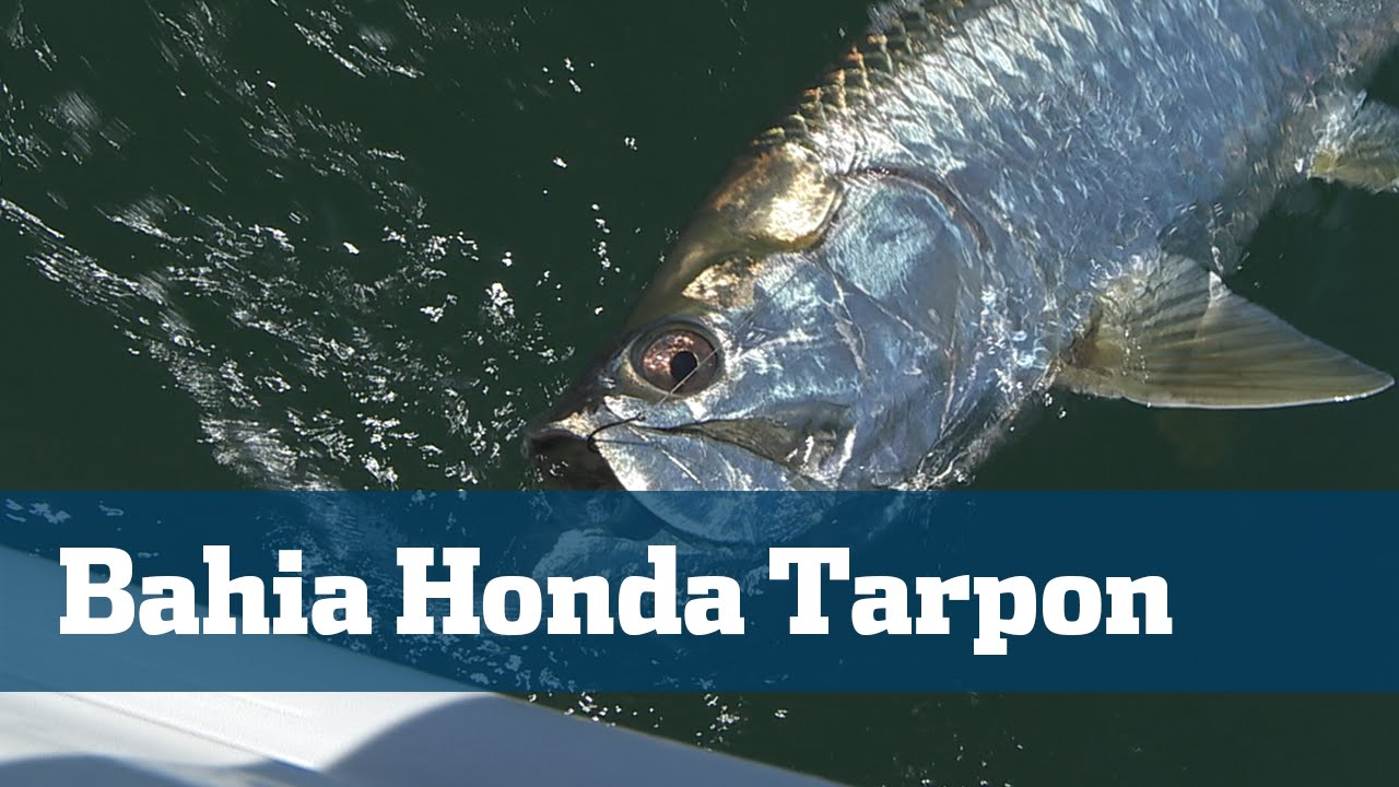 Florida sport fishing tv tarpon bahia honda florida keys for Bahia honda fishing