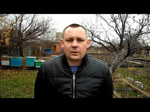 Вопрос: Какой породы пчелы в Башкортостане?