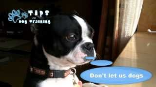 Dog Training In Chicago | Pack Leader | Dog Behaviorist