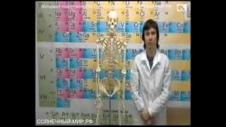 Кабинет биологии(В это видео рассмотрено устройство человеческого скелета, работа суставов и их основной функционал. Паспор..., 2013-04-05T12:18:11.000Z)