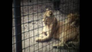dierentuin zwartberg 1973