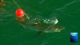 اسماك القرش تقتل سيدة عند سواحل بيرث الاسترالية بعد يومين فقط من مقتل شاب بحادث مماثل    6-6-2016