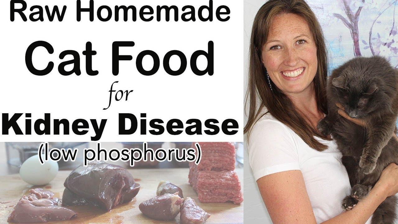Cat Food for Kidney Disease Diet