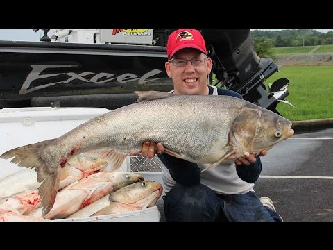 Fishing for Asian carp - How to catch bighead carp. Cooking