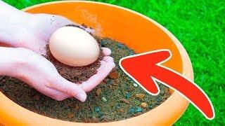 Закопайте Яйцо в Саду и Смотрите что вырастет .
