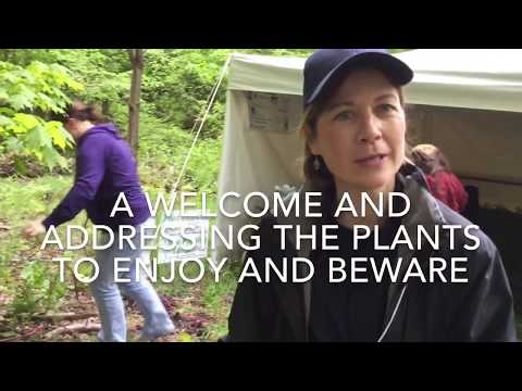 Loving the Land 2018 - Cecile Stelter Pa Bureau of Forestry