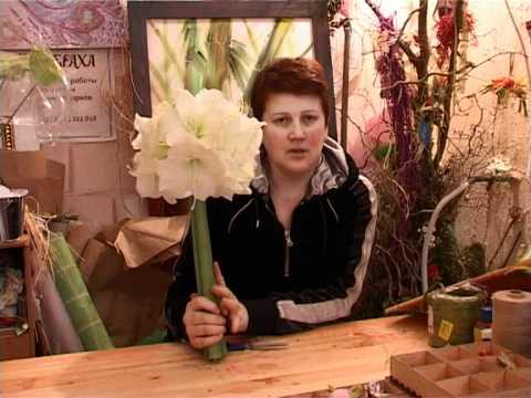 Цветы (Амариллис).