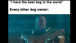 Funniest Dogs 2019! | funny dog memes