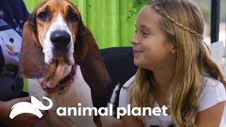 Perra ayuda a niña a recuperarse de cirugías | Pit bulls y convictos | Animal Planet