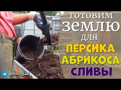 Подготовка земли для посадки персиков, абрикосов и слив
