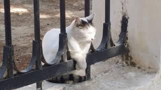 Кошка, которая смотрит на людей как-будто с балкона.