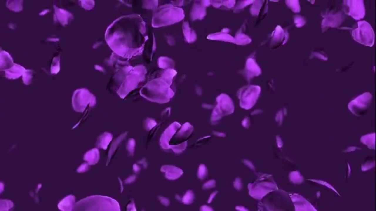 Purple rose petals youtube purple rose petals mightylinksfo