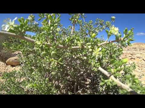 Sony FDR-X3000 Wadi Tzin, Ein Akev, Negev desert trail