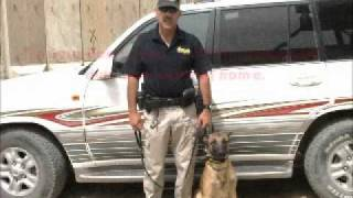 My Time In Afghanistan And Iraq As A Explosive Detection Dog Handler