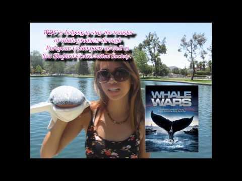Marine Biology PSA: Japanese Whaling