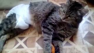 Кот Борис. Инвалид.