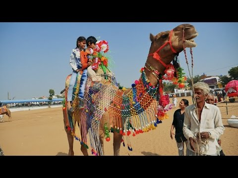 Joyful Camel Ride by Small Kids at Pushkar Fair HD Video,Rajasthan,India.Indian Camels.ऊंट Mela
