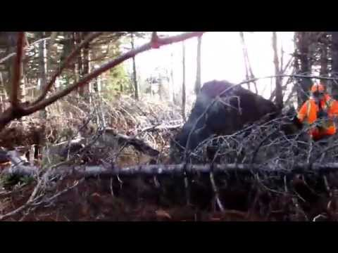 Cape Breton Moose Hunt