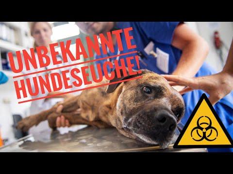 tödliche-hundeseuche-aus-norwegen---ursache-unbekannt---veterinäramt-warnt!