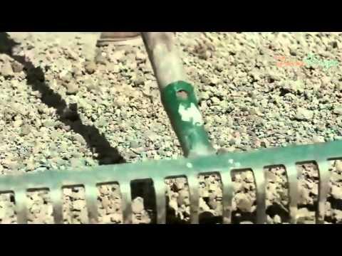 Как сажать рассаду лука порея