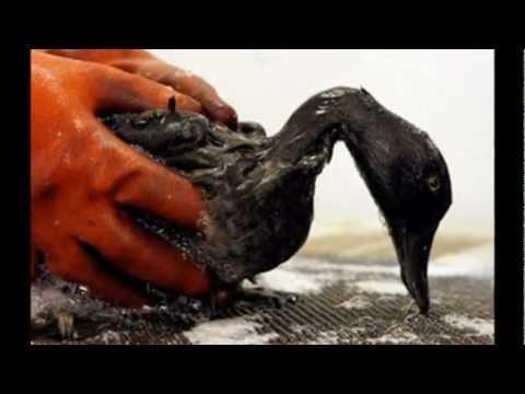 Santa Barbara Oil Spill of 1969