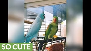 Parrot plays peekaboo with another parrot