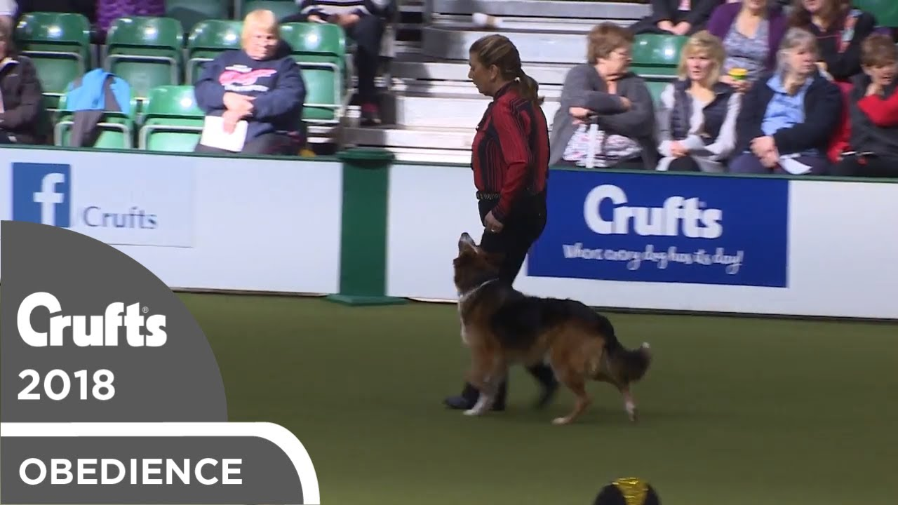 Obedience - Dog Championship - Part 12   Crufts 2018