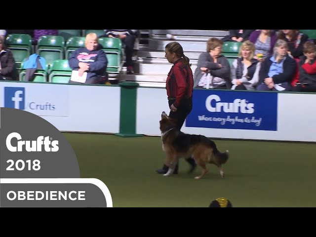 Obedience - Dog Championship - Part 12 | Crufts 2018