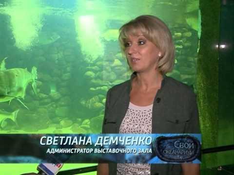 Смотреть Пензенский Океанариум онлайн