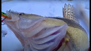 Рыбалка 2021 в ЛЮТЫЙ СИБИРСКИЙ МОРОЗ Крупный окунь и судак Рыбалка на Оби Балансир безмотылка