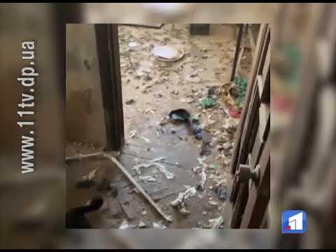Новости 11 канал: Дев'ять песиків звільнили з полону квартири по вулиці Титова