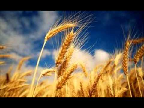 What is the chaff to the wheat? (Church of God Carmichael)