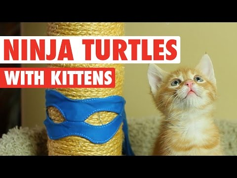 Ninja Turtles Cute Kitten Version