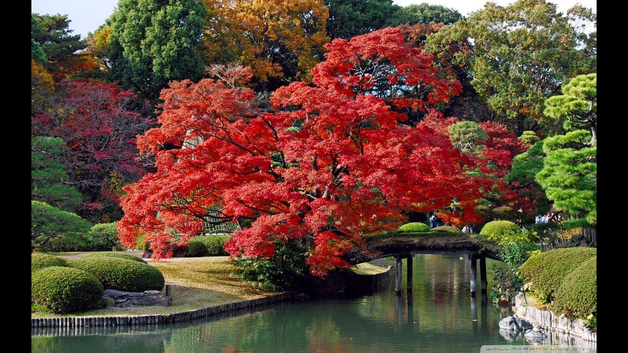 Lugares bellos de jap n te dejamos los mejores paisajes de - Jardines de japon ...